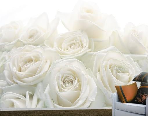 fototapet-trandafiri-albi-colectia-extra-4938923