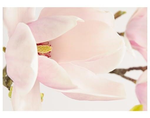 fototapet-magnolia-maiestuoasa-colectia-extra-8368486
