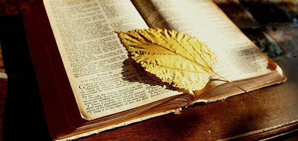 Fototapet biblioteca pentru iubitorii de carte